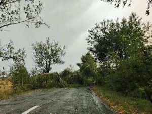 copaci rupti_efect vijelie_18 sept. 2017